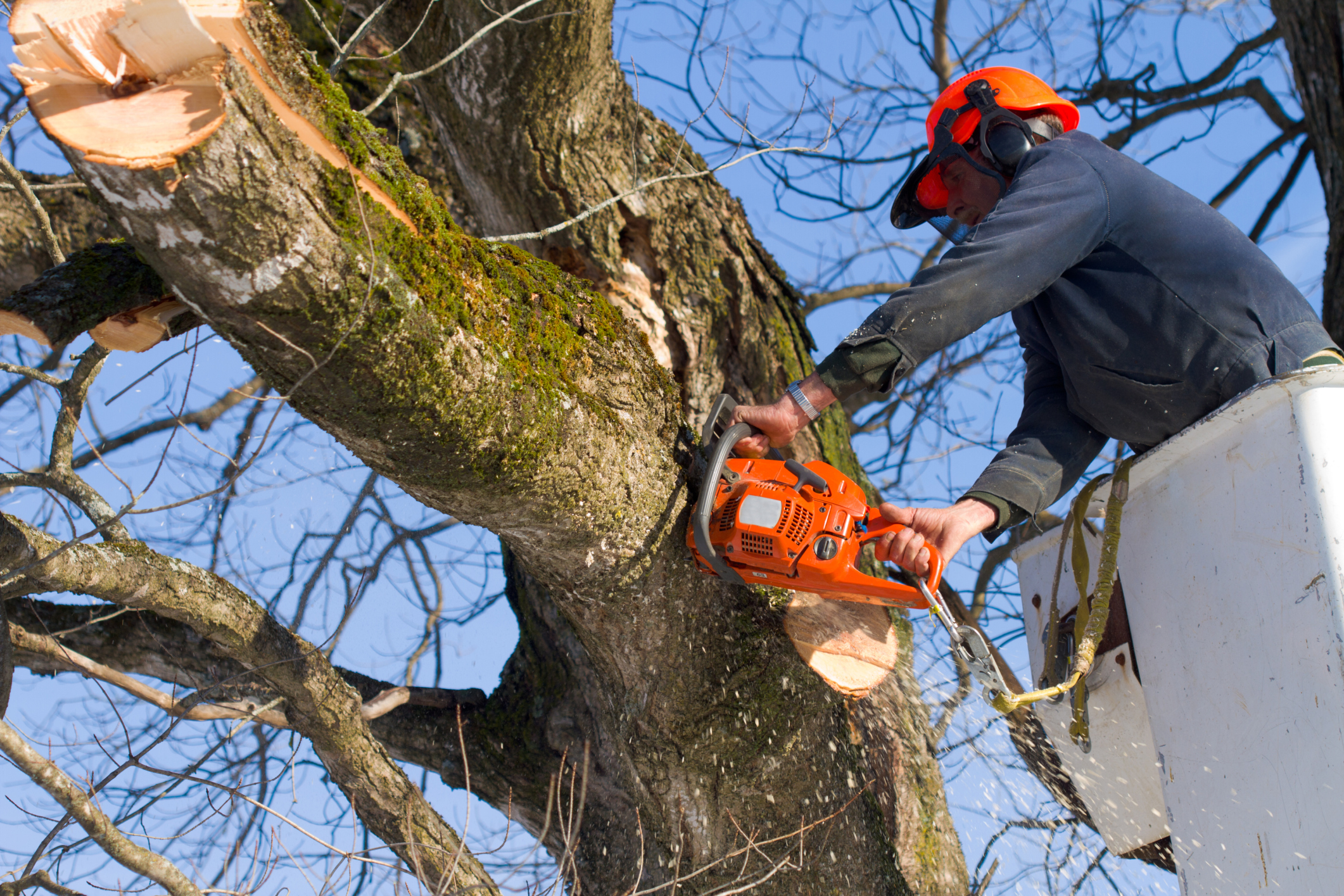 How to Choose a Tree Trimming Service in Lancaster Pa?